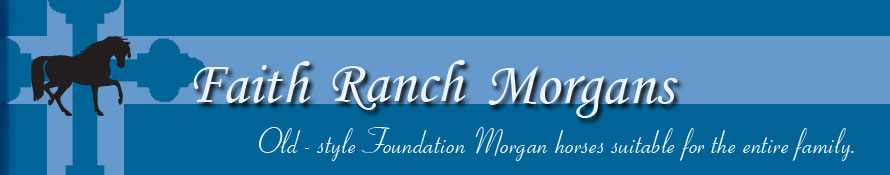 Faith Ranch Morgans